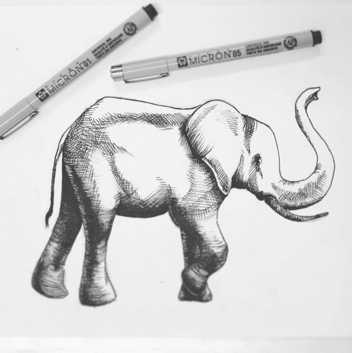 illustration - Elephant