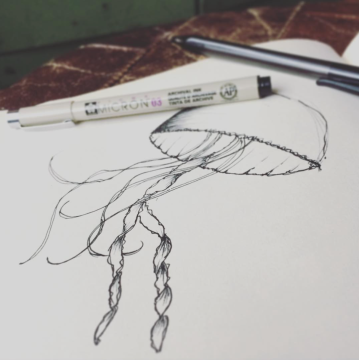 Illustration - Jellyfish