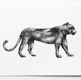 Illustration - Panther