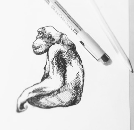 Illustration - Chimpansee
